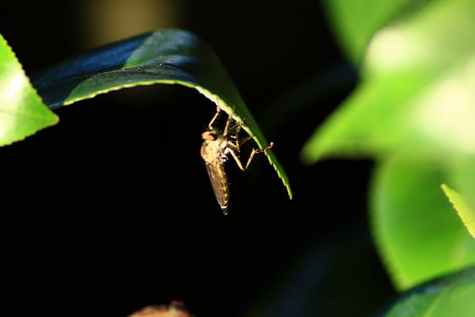 虫1.jpg