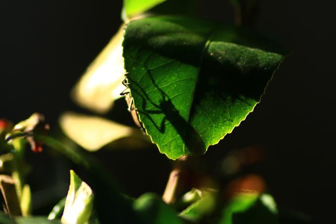 虫の影.jpg